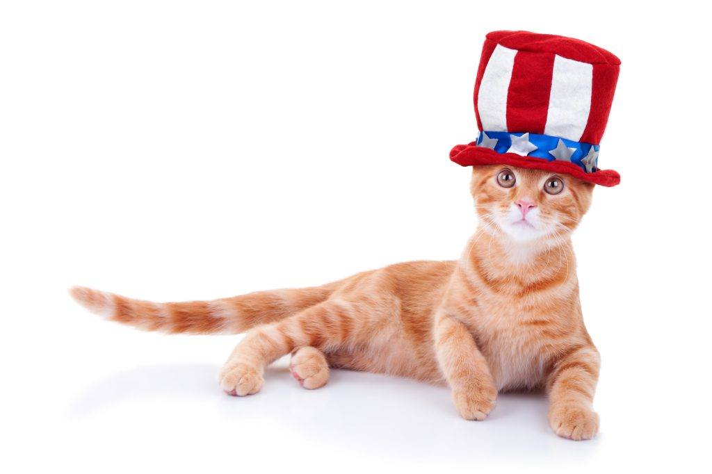 Trucker Discovers Cat Missing Since July 4th Under His Truck