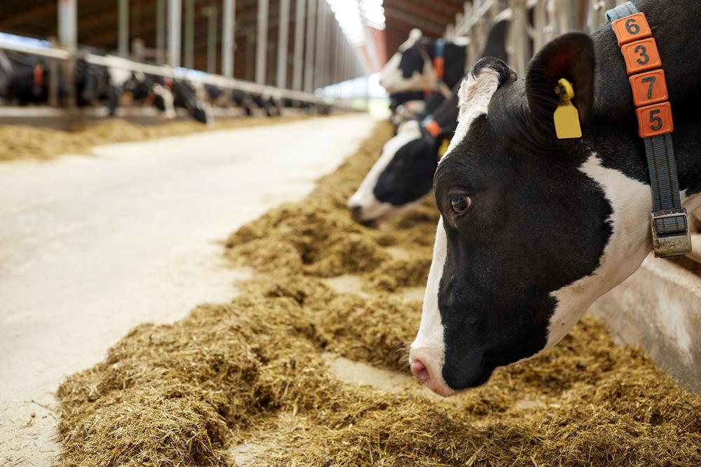 Livestock Hauler HOS Exemption Would Allow 18-Hour Days