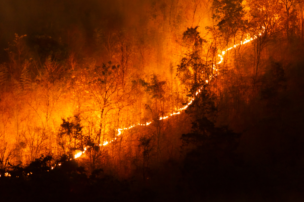 Wildfires And Hurricanes Force Closures And HOS Suspensions