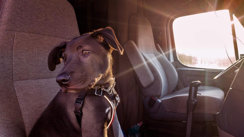 """Like Animals? This Group Of Truckers Transports Rescues To """"Furever"""" Homes"""
