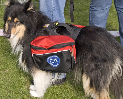 Carrier Sued For Not Hiring Driver With Service Dog